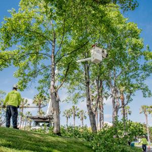 Commercial Landscape Tree Service